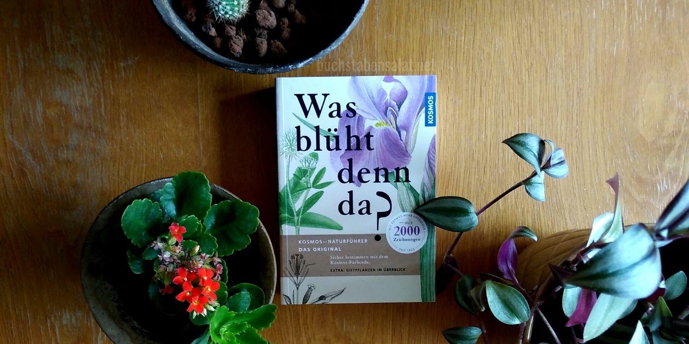 Was blüht denn da? Coverfoto zwischen verschiedenen Zimmerpflanzen. #Pflanzenwoche